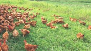 Huevos alternativos, más pasos fuera del cascarón