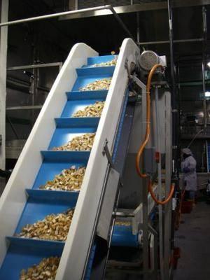 Mol Industries banda transportadora higiénica