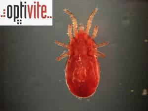Optivite Ltd.: insecticida Red-Lite