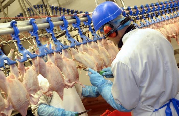 Colombia: avicultura genera más de 356,000 empleos