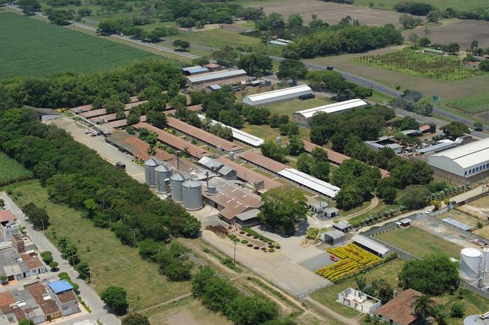 Avícola Santa Rita podría generar 1.8 MWh con gallinaza