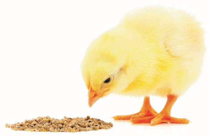 Costa Rica estudia uso de ácidos orgánicos en avícolas