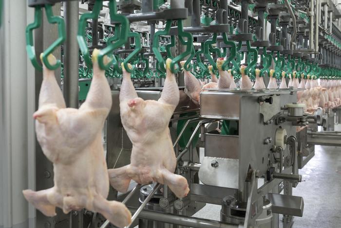 Listas dos empresas hondureñas para exportar pollo a EE UU