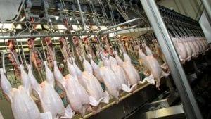 Exportación y sanidad en la Cumbre Avícola Latinoamericana