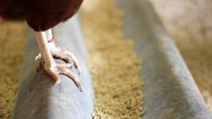 En peligro tres millones de aves en el sur de Colombia