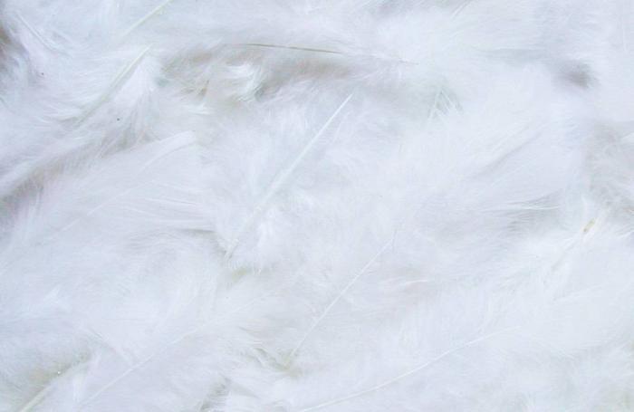Queratina de plumas de pollos sirve para purificar agua
