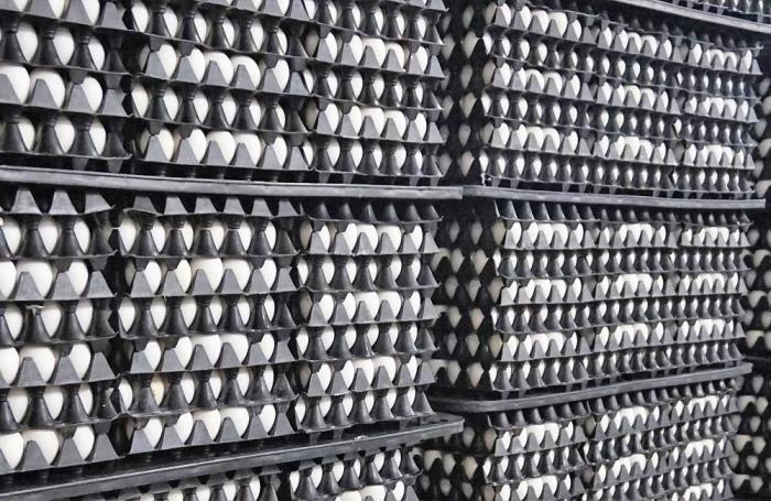 Ganan con Novogen premio en concurso de huevos en Brasil