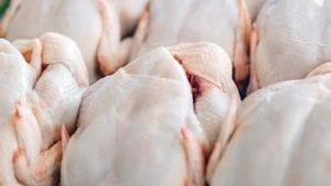 Sobreoferta amenaza con quebrar avícolas dominicanas