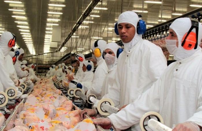 Pululan los fraudes de falsos exportadores de pollo