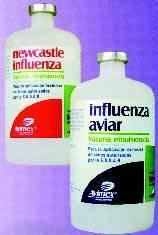Avimex vacunas