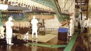 Avícola Salvadoreña