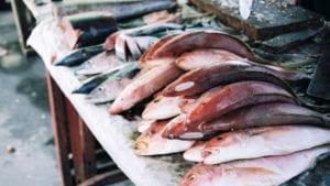 Pescado, lácteos y pollo: mayores transmisores de enfermedades