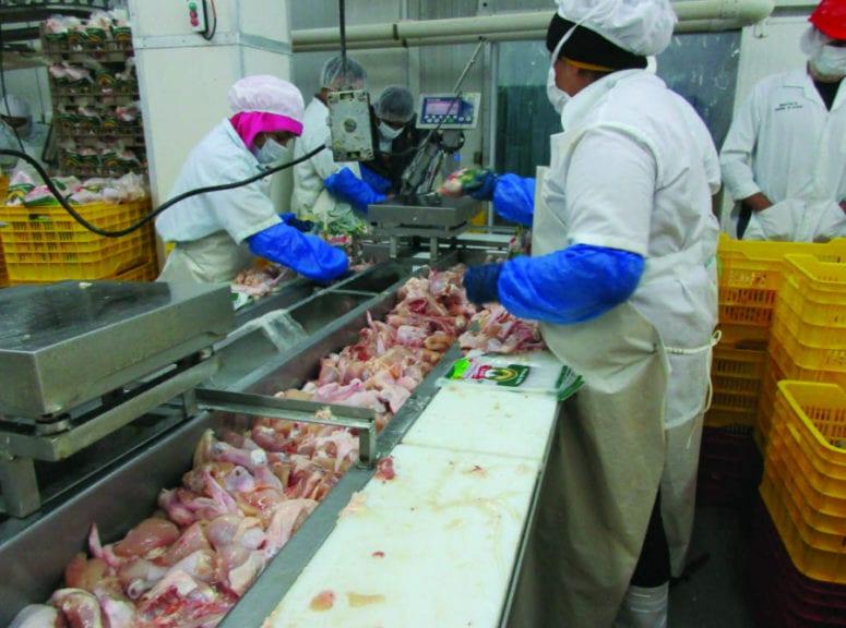 Cómo garantizar un empaque eficiente de pollo procesado