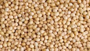 Brasil suspenderá aranceles a maíz y soya importados