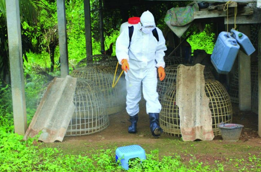 La importancia de la zoonosis y antropozoonosis
