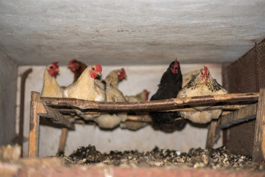 ¿Qué tan cerca estamos de una economía circular avícola?