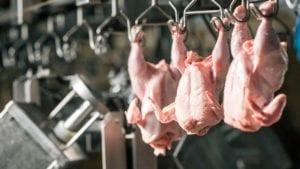 Más allá del cloro en la faena final del pollo