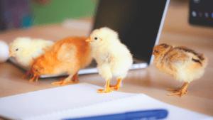No imaginábamos poder usar fibra fermentable en aves