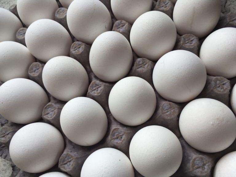 Donación de Hy-Line para investigación en genética aviar