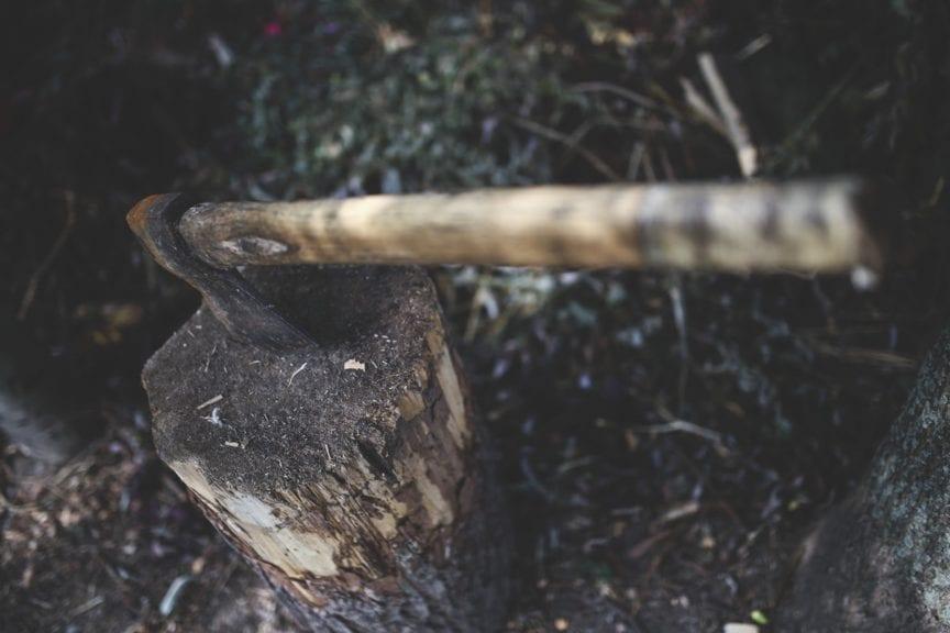 Amazonia de Brasil no se deforesta para producir pollos