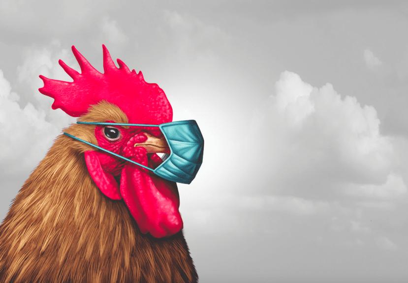 FAO: poco probable que productos avícolas transmitan COVID-19