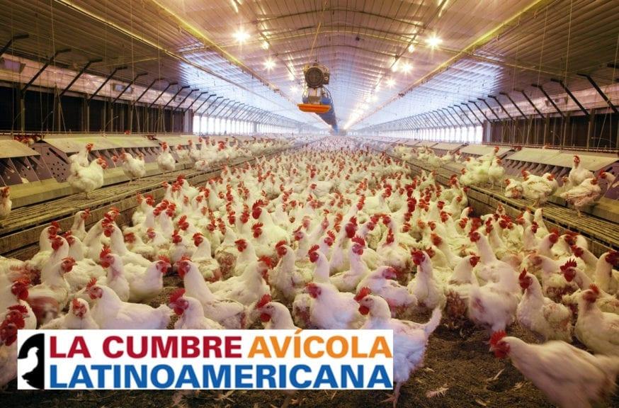 El destino de la avicultura en Latinoamérica