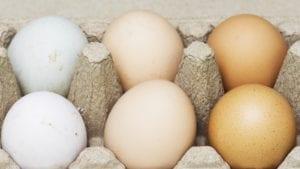 ¿Qué tanto 'pinta' el color en el negocio del huevo?