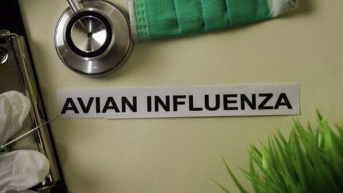 Nueve países reportan influenza aviar en aves de corral