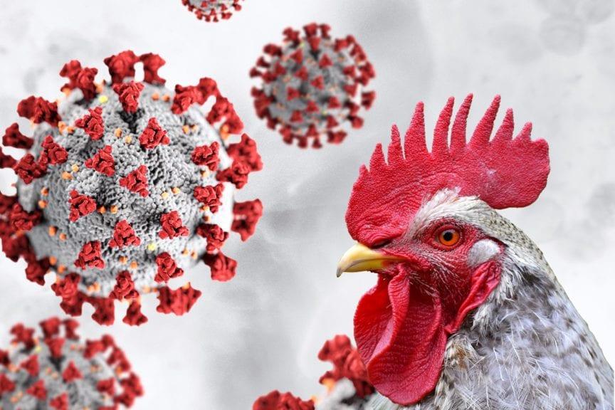 COVID-19: Amenazas y oportunidades para la avicultura