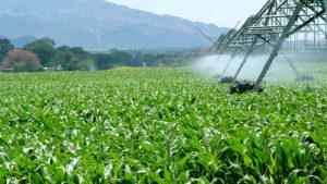 Bolivia podría triplicar su producción de maíz y soya