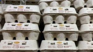 Argentina: cuarto mayor productor de huevos en Latinoamérica