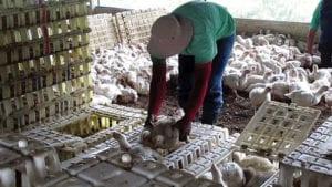 Consejos para reducir decomisos en la planta procesadora