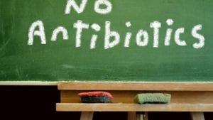 Sector avícola español redujo en 95% el uso de antibióticos