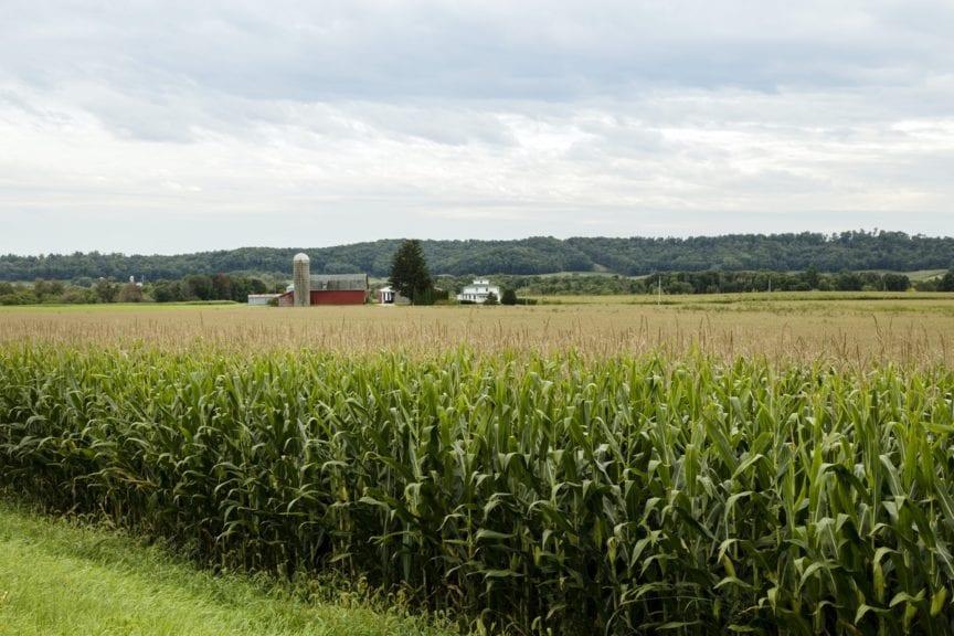Flujo del maíz de EE UU hacia la avicultura latinoamericana