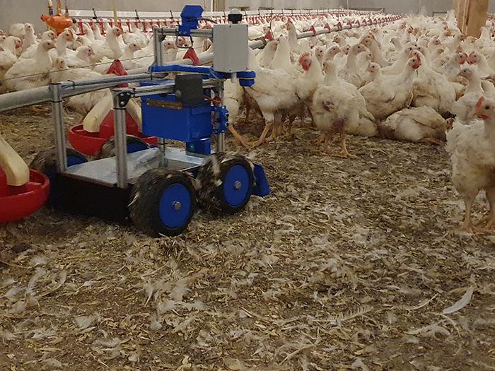 Industria avícola se acerca a las granjas conectadas con robots
